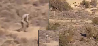 Мистическое двуногое существо бродит по Португалии. Видео
