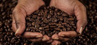 Ученые сообщили, когда на Земле закончится кофе