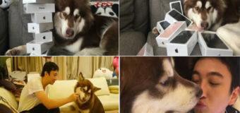 Сын китайского миллиардера подарил собаке партию iPhone 7. Фото