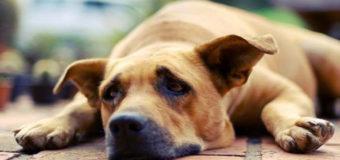 В Киеве расстреляли сторожевых собак