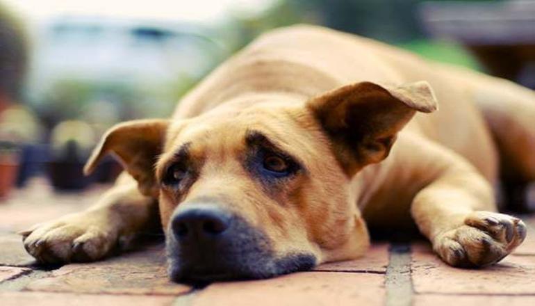 В Мариуполе из квартиры многоэтажки забрали 22 собак