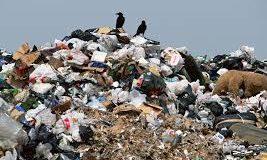 В сети шокированы применением львовского мусора
