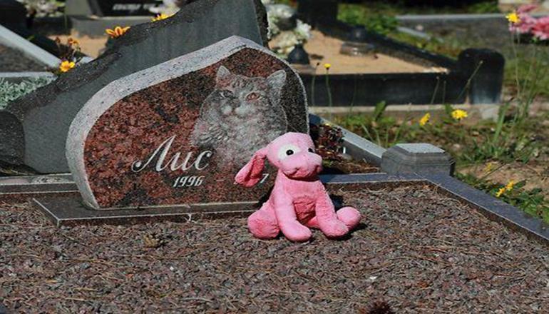 Жители Киева предлагают открыть в городе кладбище для животных