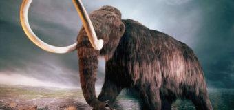 Ученые извлекли ДНК мамонта