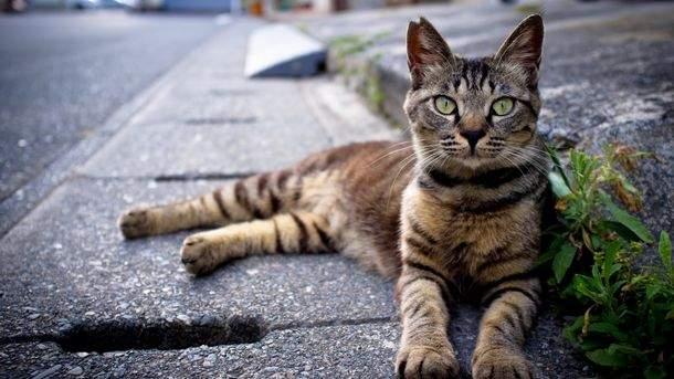 Жители Мелитополя бьют тревогу: в городе отстреливают котов