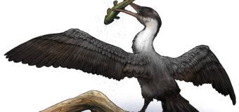 В Арктике нашли останки птицы, жившей около 90 млн лет