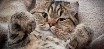 Стрельба в Киеве: пострадал кот