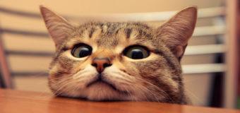 Киевляне требуют позволить котам свободно жить в подвалах и на чердаках