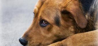 В Днепре останки беспризорных собак будут сжигать в печи