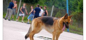 В Киеве из-за собаки на  баскетбольной площадке ножом ранили мужчину