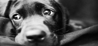 В Николаеве обнаружили живодера, который ел собак