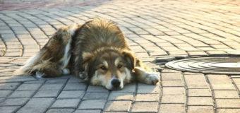 В Киеве предложили отдать МАФы бездомным кошкам и собакам