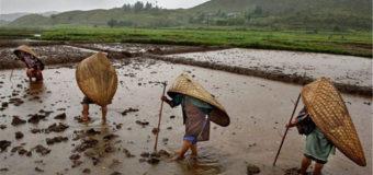 Найдено самое дождливое место на планете