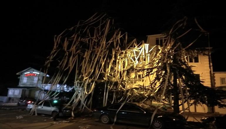 Фотофакт: В Крыму елку украсили туалетной бумагой