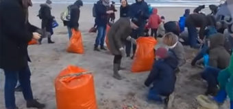 В Германии на берег вынесло тысячи «Киндер-сюрпризов». Фото