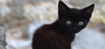 Чудовищный случай: в РФ женщина безжалостно раздавила котенка на глазах у детей