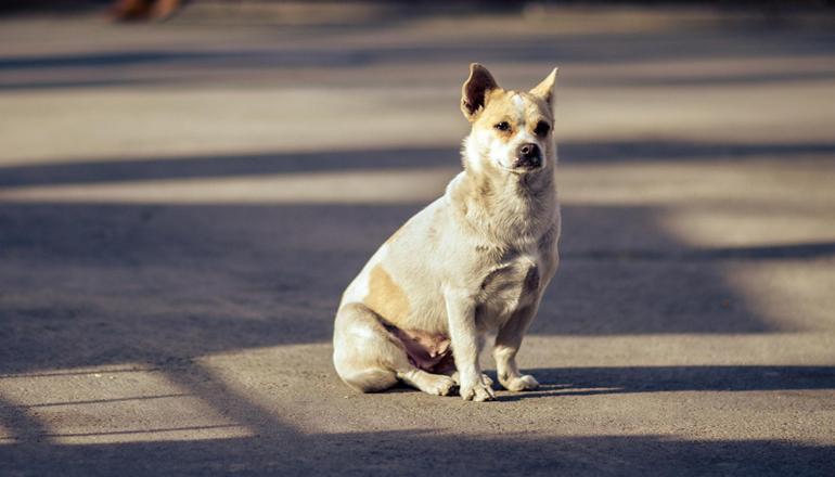 В Киеве собак расстреливают прямо из авто