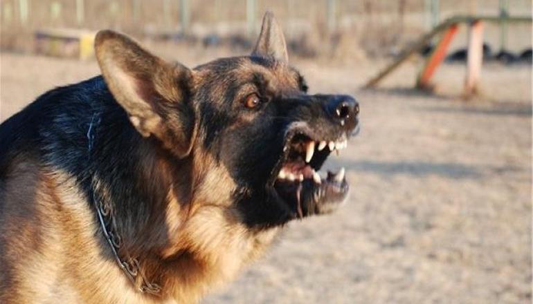 Под Борисполем собаки загрызли участника АТО