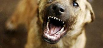 На киевлян нападают бродячие собаки