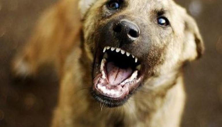 На пожилого киевлянина напала бродячая собака