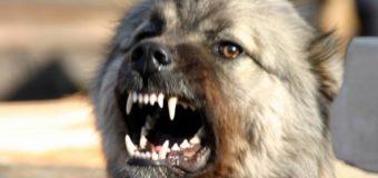 В Херсонской области собака загрызла мужчину