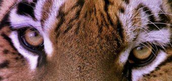 Ученые предсказали, что через 80 лет вымрет половина животных
