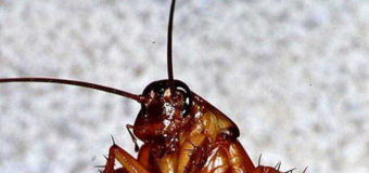 Врачи в шоке: у индианки в голове 12 часов жил таракан