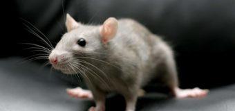 Мышь в хлебе: киевляне шокированы находкой