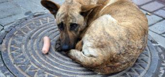 В Киеве узнали, сколько бездомных собак бегают по улицам