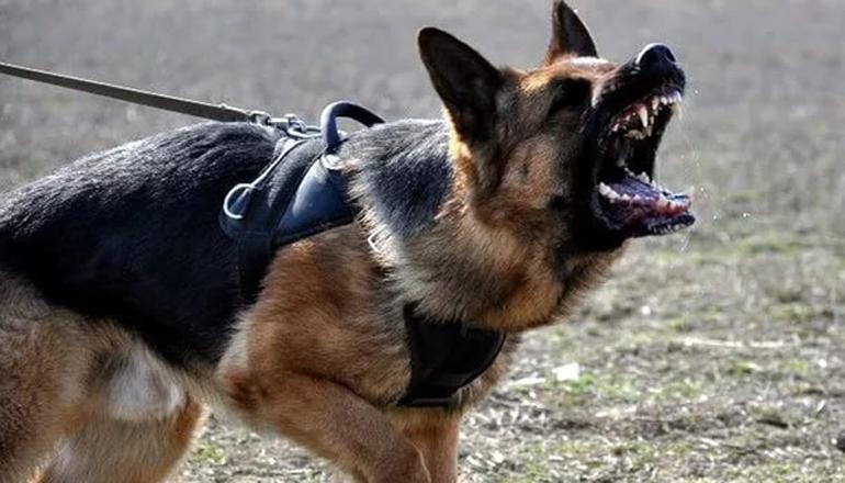 На Киевщине мужчина натравил на брата собаку