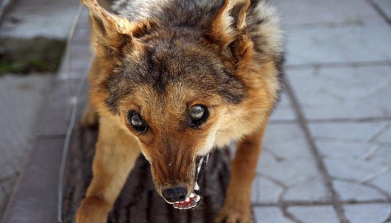 Из-за бешеной собаки на Ровенщине ввели карантин