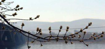 Украинцам рассказали, какой будет весна