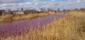 На Черниговщине озеро стало розовым. Фото