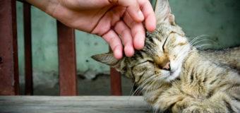 Массово гибнут кошки: киевляне бьют тревогу