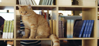 Во Львове приглашают на работу музейного кота