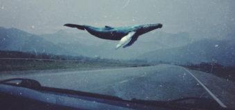 Смертельный «Синий кит» добрался до Великобритании, люди в панике