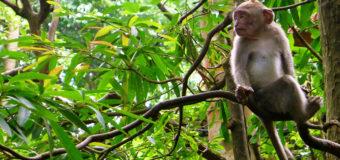 В Индии обнаружили «девочку Маугли»