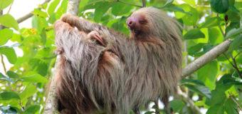 В Бразилии нашли туннели, вырытые гигантскими ленивцами