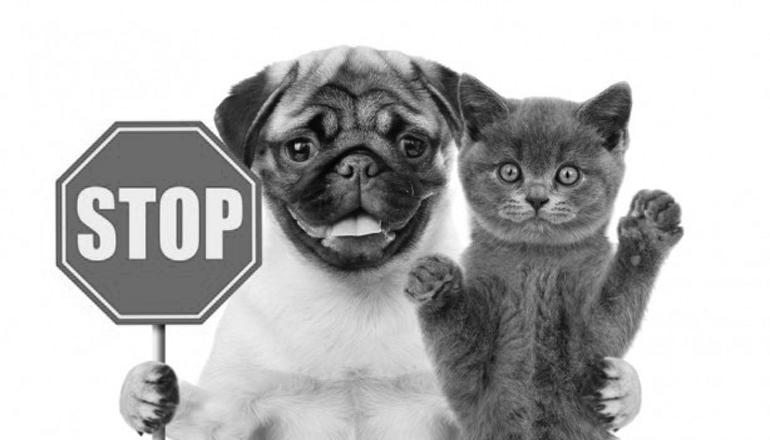 Тайский парламент запретил есть кошек и собак