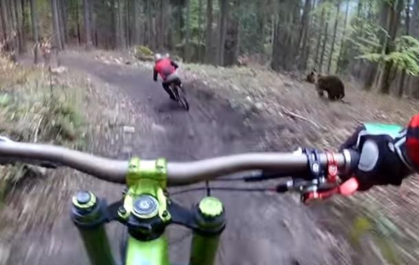Видео гонки медведя за велосипедистом «взорвало» Сеть