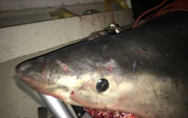 В Австралии к 73-летнему рыбаку в лодку запрыгнула огромная акула. Фото