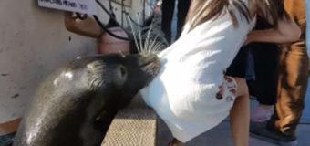 В Канаде морской лев схватил за платье девочку и утащил ее под воду. Видео