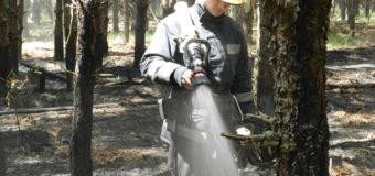 На Херсонщине произошел масштабный лесной пожар. Фото