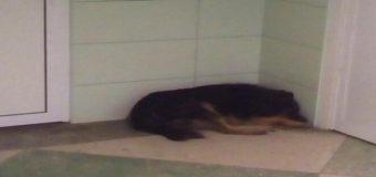 Скандал в Одессе: в областной больнице грязь и собаки в коридорах. Фото