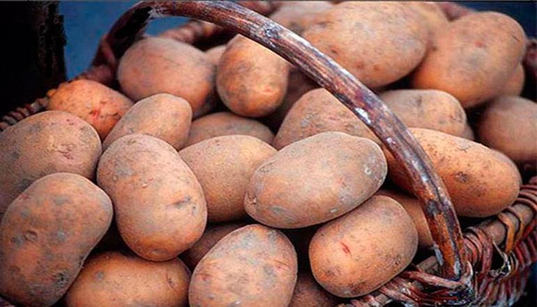 Фотофакт: в России дороги «ремонтируют» картошкой