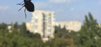 Одессу атакуют жуки-вонючки
