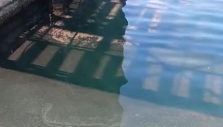 ЧП: в Одессе «красят» море