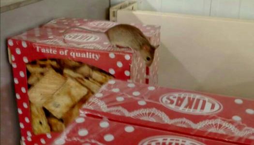 В киевском супермаркете мышь бегала по печенью. Фото