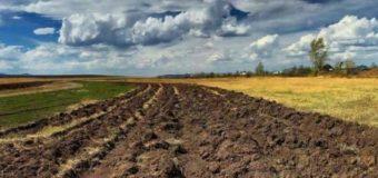 Верховная Рада ещё на год продлила мораторий на продажу сельскохозяйственных земель