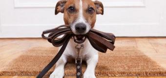 В Киеве хотят запретить выгуливать собак во дворах